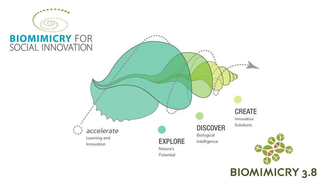 Conférence : Janine Benyus – le Biomimétisme en action (VOSTFR)