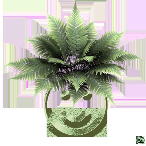 dxsigner - DXHOME - biomimétisme architecture-Design biomimétique - Analogie avec une plante (Fougère Smiley 001) - Bretagne - Finistère - Brest - Morlaix - Quimper.